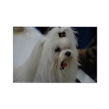 Small White Dog Rectangle Magnet
