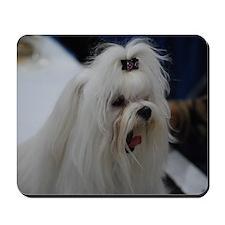 Small White Dog Mousepad