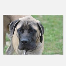 Cute English Mastiff Dog Postcards (Package of 8)