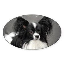 Black and White Papillon Dog Decal