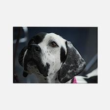 Adorable Pointer Dog Rectangle Magnet