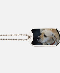 Portuguese Pointer Dog Tags