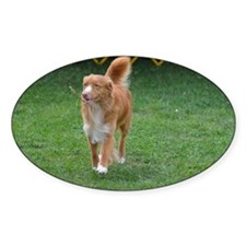 Duck Tolling Retriever Decal