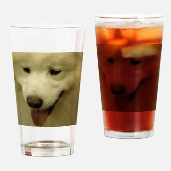 Cute White Samoyed Dog Drinking Glass