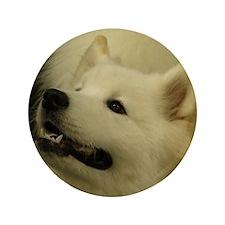"Sweet Samoyed 3.5"" Button"