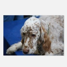 Adorable English Setter D Postcards (Package of 8)