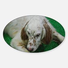 Cute English Setter Sticker (Oval)