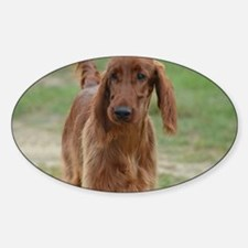 Silky Red Irish Setter Decal