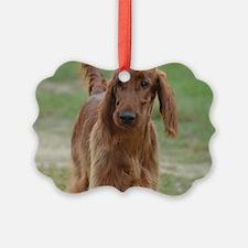 Silky Red Irish Setter Ornament