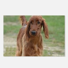 Silky Red Irish Setter Postcards (Package of 8)