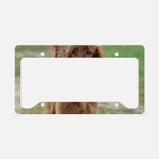 Silky Red Irish Setter License Plate Holder