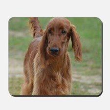 Silky Red Irish Setter Mousepad