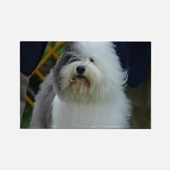 Cute Face of a Sheepdog Rectangle Magnet