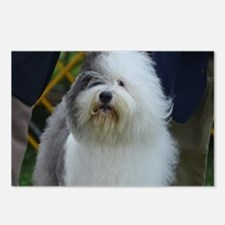 Cute Face of a Sheepdog Postcards (Package of 8)