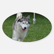 Cute Siberian Husky Dog Sticker (Oval)