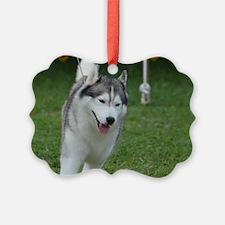Cute Siberian Husky Dog Ornament