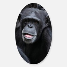 Black Monkey Sticker (Oval)