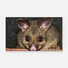 Possum with big eyes Rectangle Car Magnet