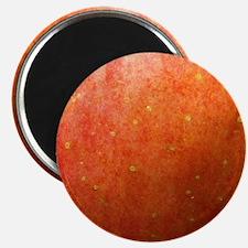 Apple Skin Magnet