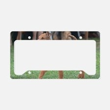 Irish Terrier License Plate Holder