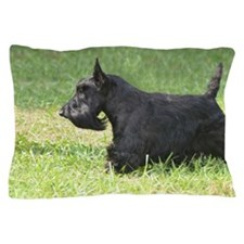 Scottish Terrier Pillow Case