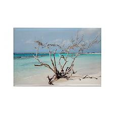 Baby Beach in Aruba Rectangle Magnet