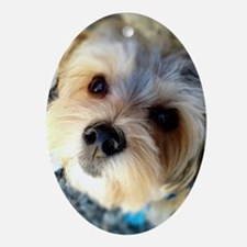 Morkie Love Oval Ornament