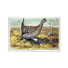Sharp-Tailed Grouse Bird Rectangle Magnet (10 pack