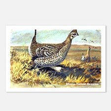 Sharp-Tailed Grouse Bird Postcards (Package of 8)