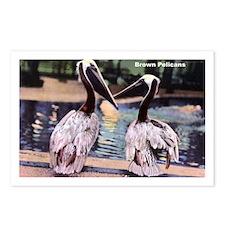 Brown Pelican Bird Postcards (Package of 8)