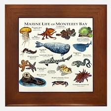 Marine Life of Monterey Bay Framed Tile