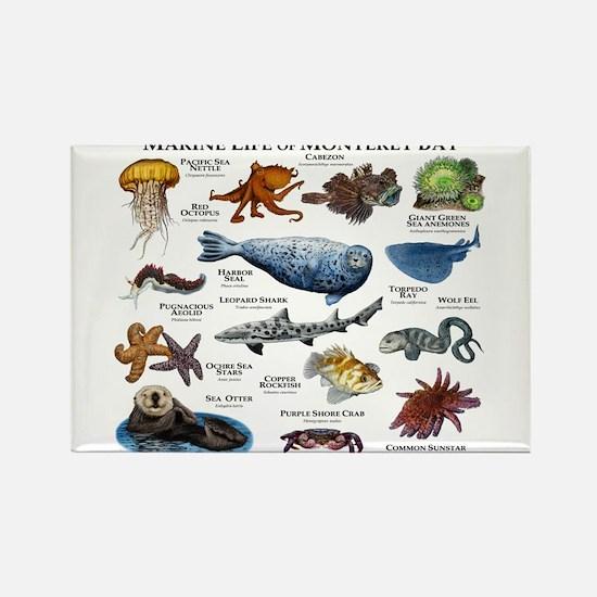 Marine Life of Monterey Bay Rectangle Magnet