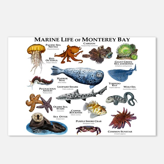 Marine Life of Monterey B Postcards (Package of 8)