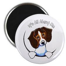 "Tricolor Beagle IAAM 2.25"" Magnet (10 pack)"