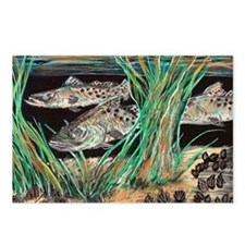 Speckled Trout Postcards (Package of 8)