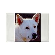canaan dog Magnets