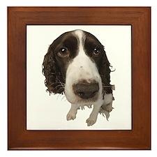 Springer Spaniel Close-Up Framed Tile