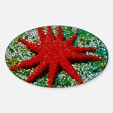 Stained Glass Starfish Decal