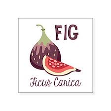 Fig Ficus Carica Sticker