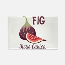 Fig Ficus Carica Magnets