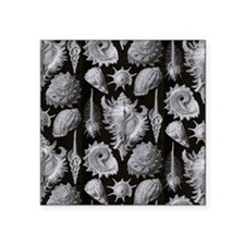 """Haeckel Shell Sheet all ove Square Sticker 3"""" x 3"""""""