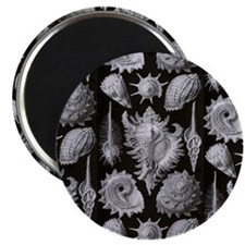 Haeckel Shell Sheet all over tee Magnet