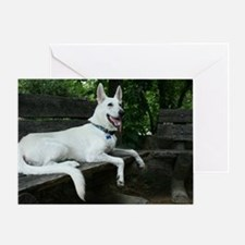 White Shepherd on a bench. Greeting Card