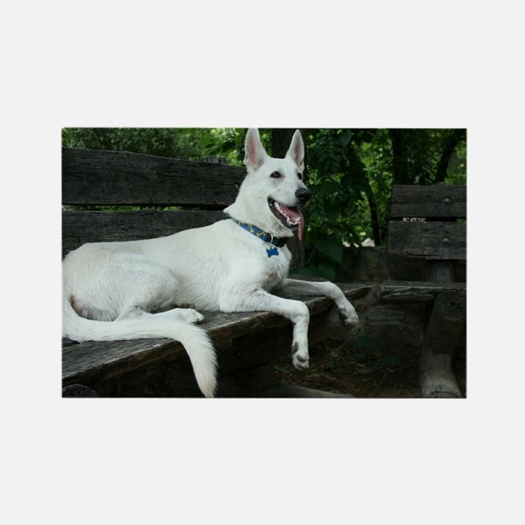 White Shepherd on a bench. Rectangle Magnet