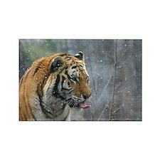 Tiger Tongue by Leslie Wainger Rectangle Magnet