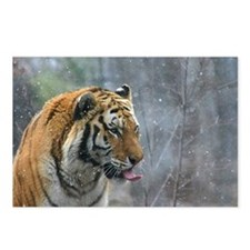 Tiger Tongue by Leslie Wa Postcards (Package of 8)
