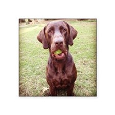 """Chocolate Lab  With Ball Square Sticker 3"""" x 3"""""""
