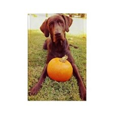 Halloween Chocolate Lab Rectangle Magnet