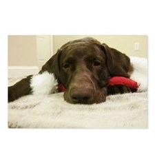 Chocolate Lab Christmas 2 Postcards (Package of 8)