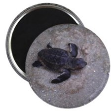Leatherback Baby Sea Turtle Magnet